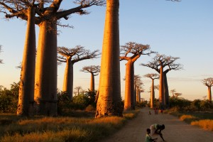 Morondava is the best base for a visit to the Avenue du Baobab, and I recommend staying at the Chez Maggie Hotel. It's run by an American, Gary Lemmer, who also puts together adventure trips up and down the coast and to mind-blowing national parks like Tsingy.