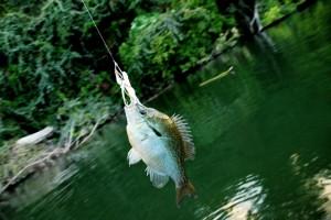 Fishing - Photo courtesy of Shane Townsend