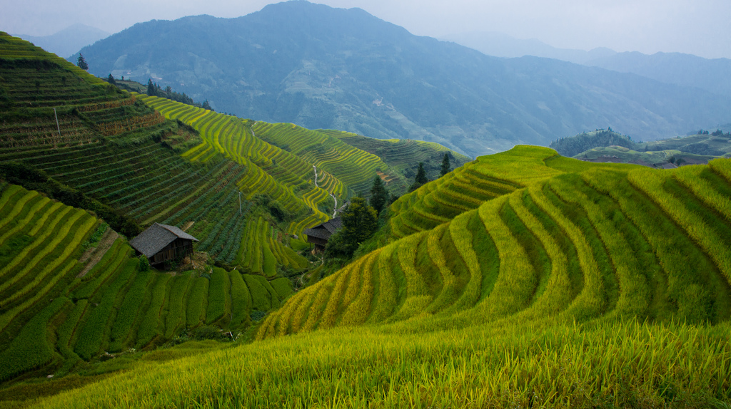 30 spectacular examples of terraced agriculture pics for Terrace farming definition