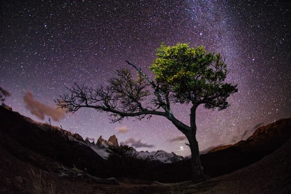A purple night sky, sharp mountain peaks on the horizon, a tree in the foreground