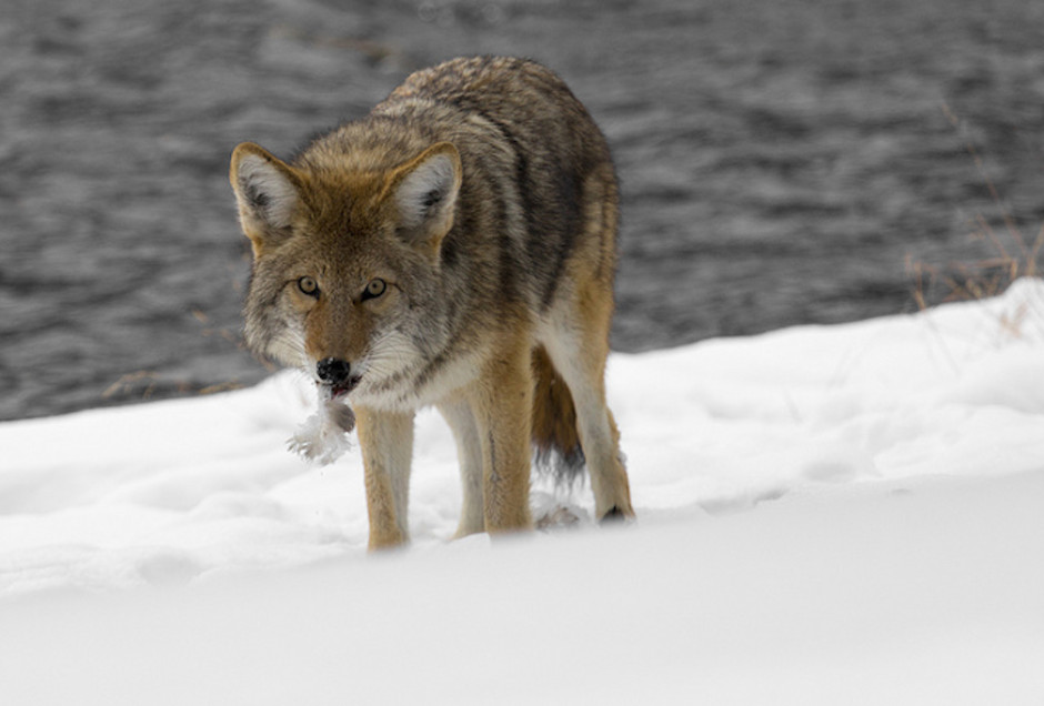 Photo:  Yellowstone National Park