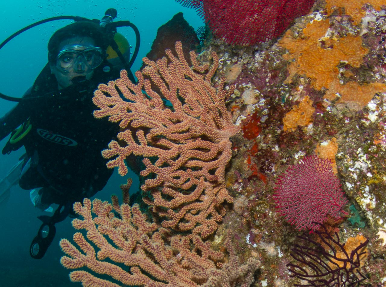 why coral reefs need to be You have probably seen pictures of coral reefs before—lots of colors,  coral  reefs need your help, too more people need to understand why coral reefs are  im.