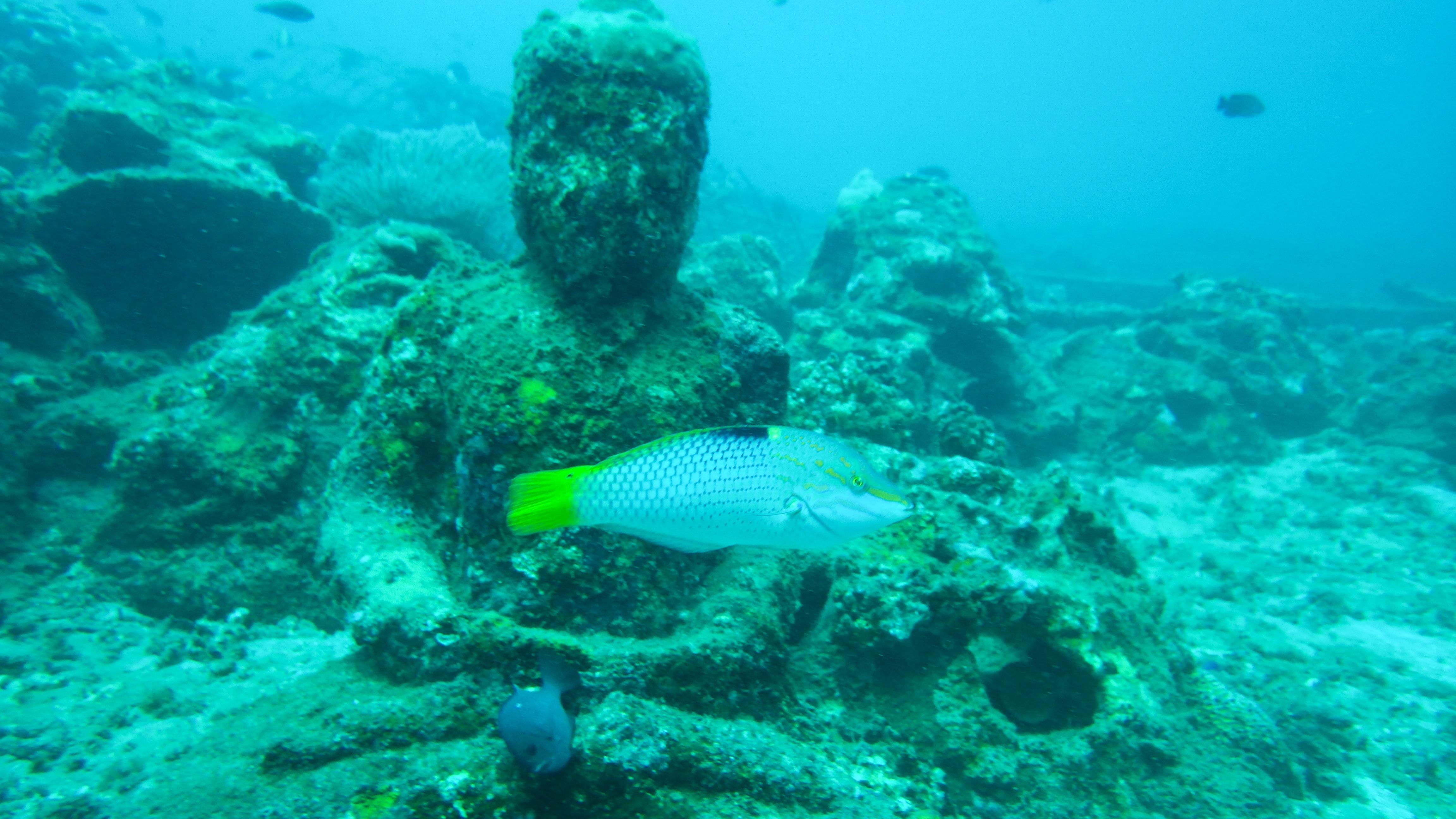Buddhas at Jepun reef