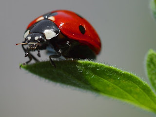 ladybugs, aphids, beetles make best bug repellents when dead of course