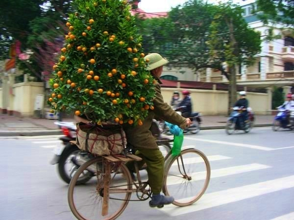 Vietnam-tree-bike