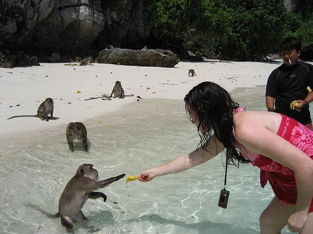 Thailand-beach-with-monkeyjpg