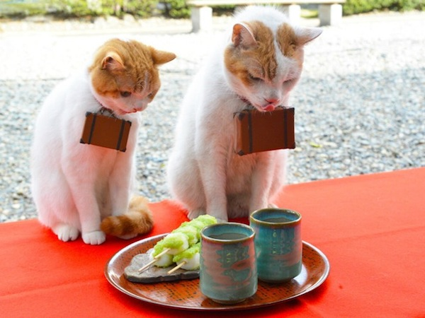 Cats-Eating-Sushi