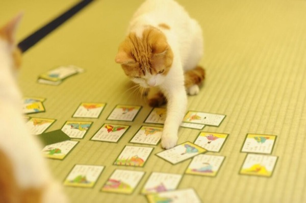 Cats-Playing-Cards