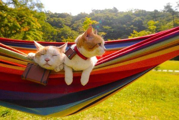 Cats-Relaxing