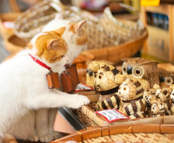 Cats-Shopping