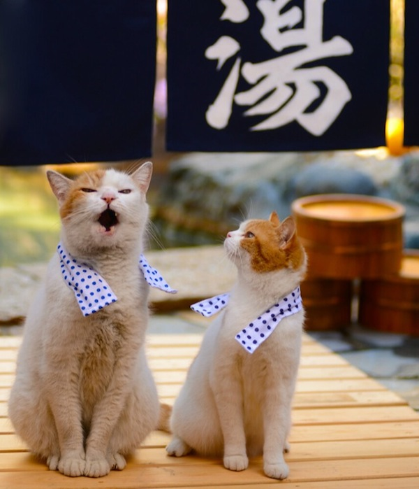 Cats-Traveling-in-Japan