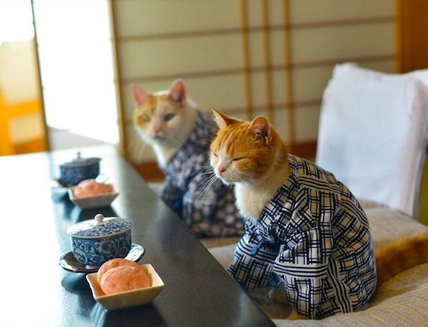 Cats-at-Tea-Ceremony