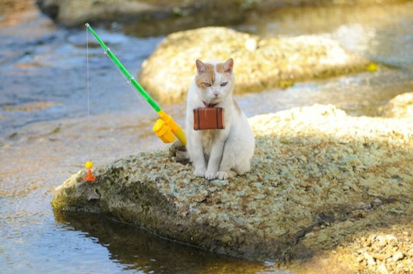 Cats-in-Japan-Fishing