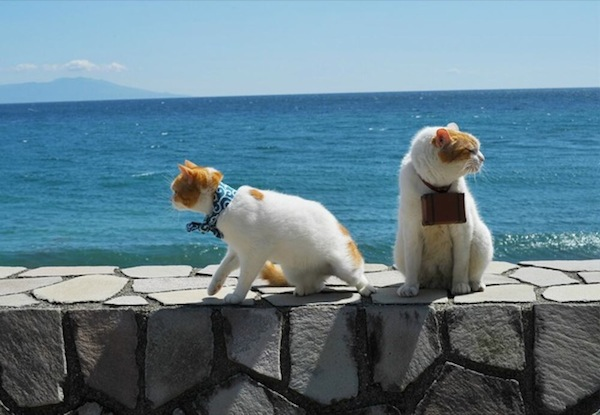 Cats-on-the-Beach