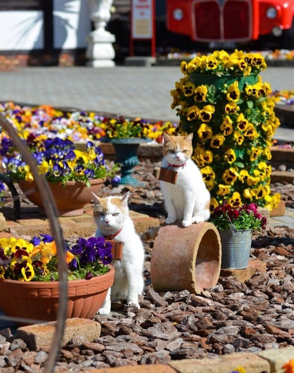 Cute-Cats-Promoting-Japan