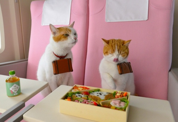 Japanese-Tourism-Promoted-by-Cats