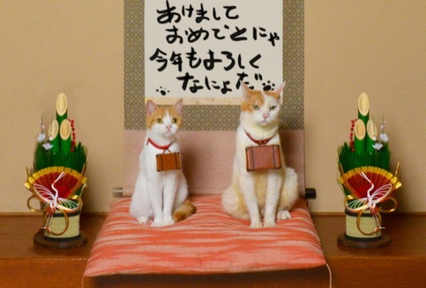Traveling-Cats-in-Japan
