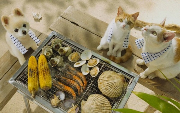 cats_barbeque