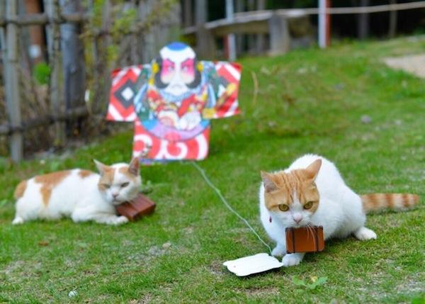 cats_japan_tourism