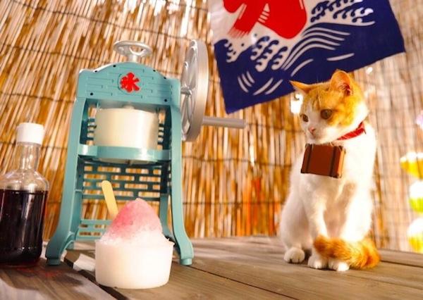cats_travel