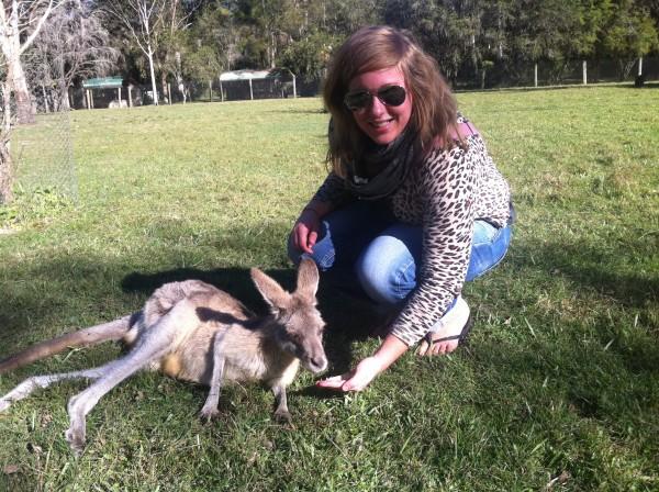 Feeding a kangaroo, Australia