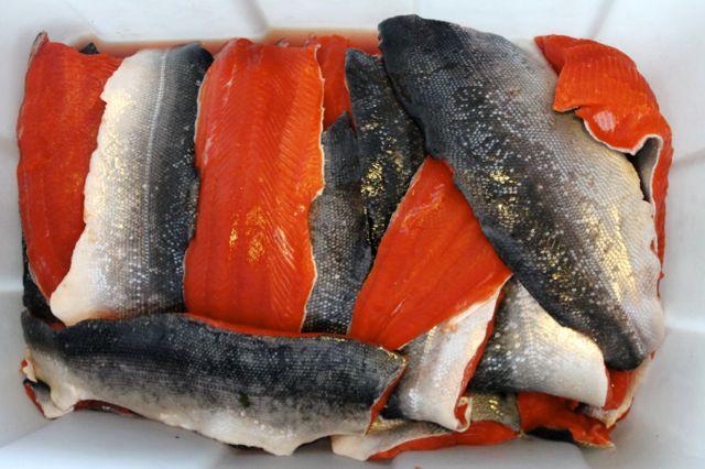Fresh Fish'