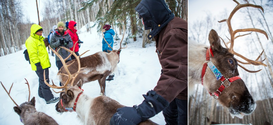 hiking with reindeer