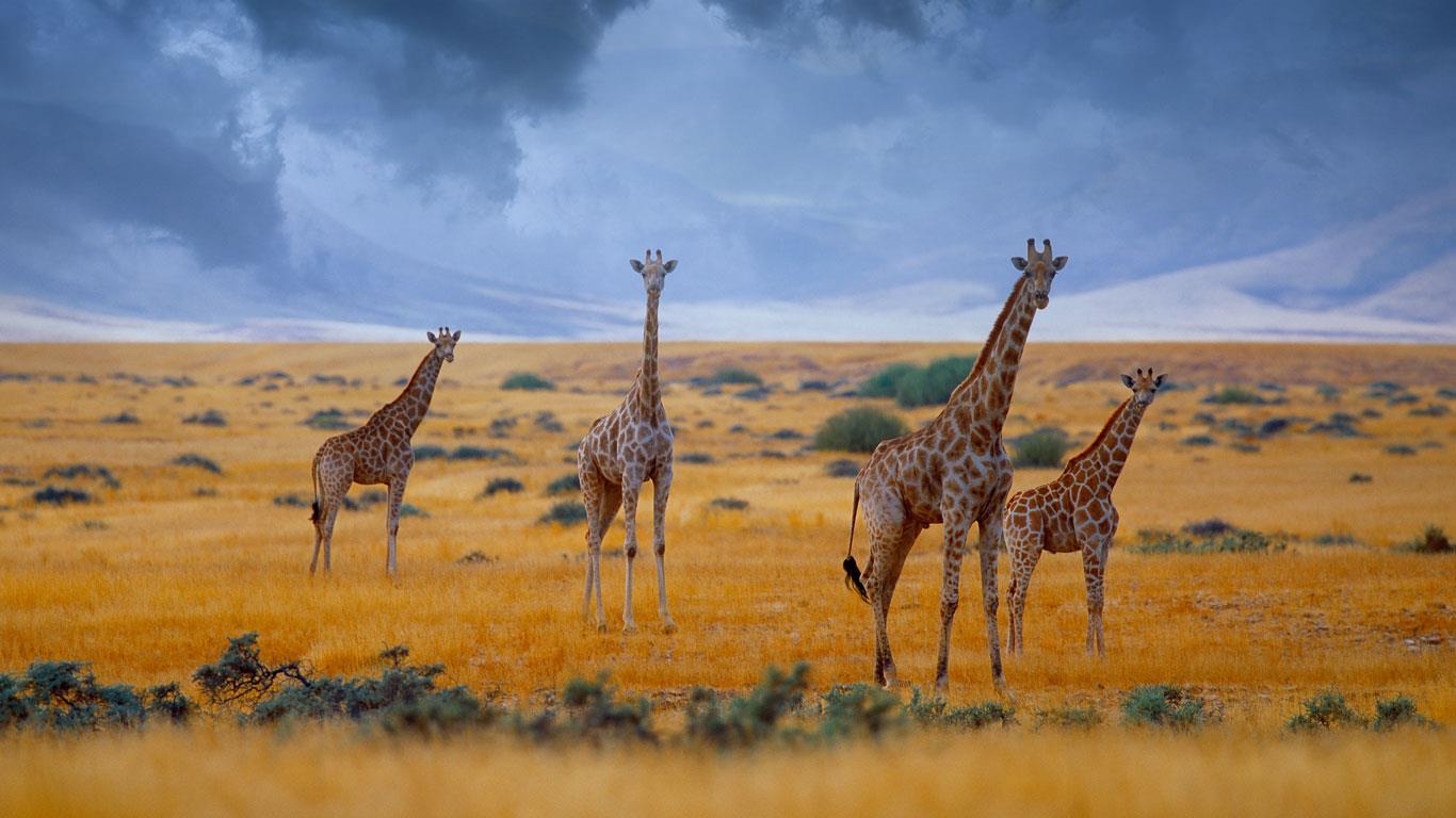 4-Namibi