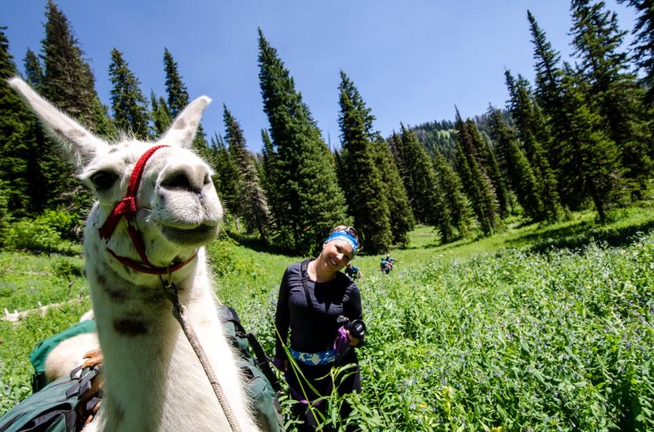 1-llama-trekking