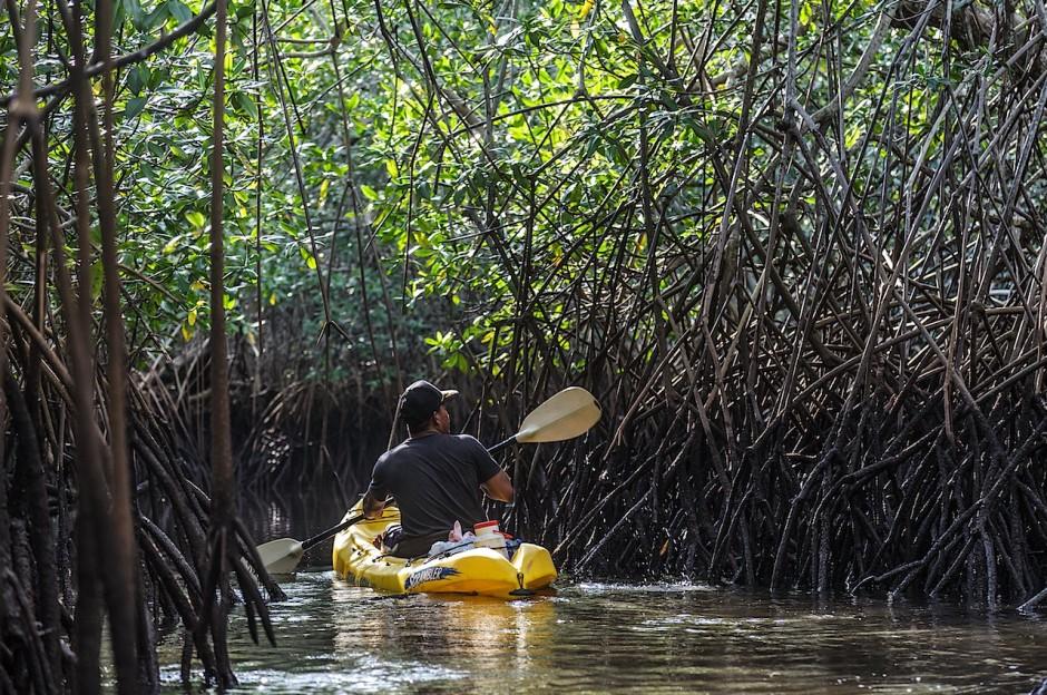 15-mangroves