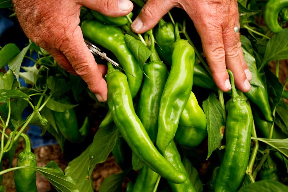 2-hatch-chile-1