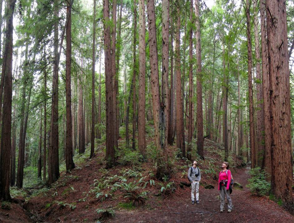 28-redwood-park