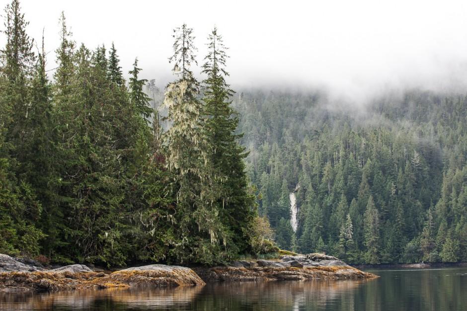 4-great-bear-rainforest