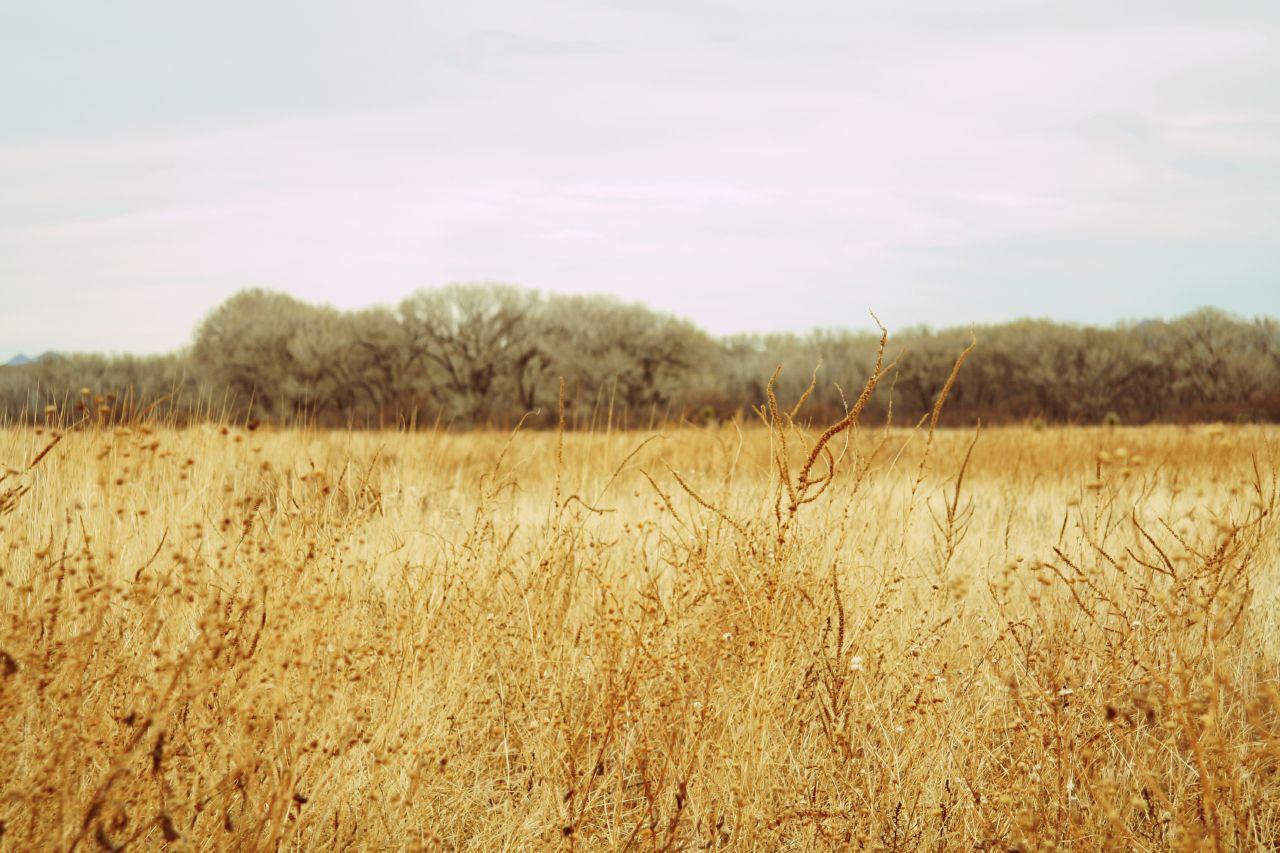 3-san-pedro-cottonwoods-1