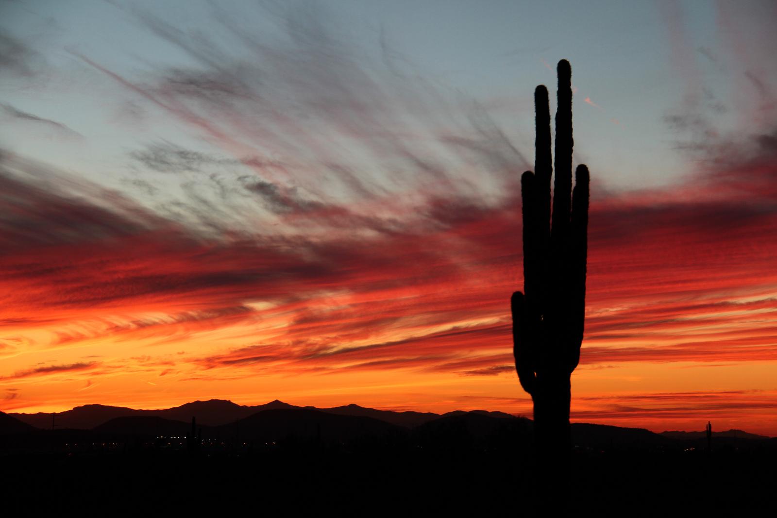 6-saguaro-east-3
