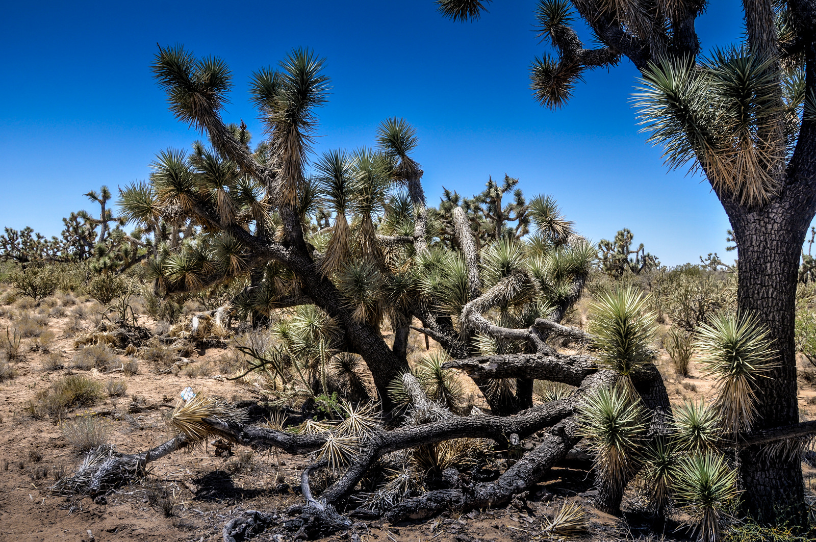 8-joshua-tree-arizona-1