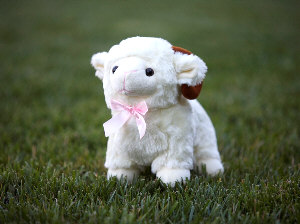 Organic Cotton Toys