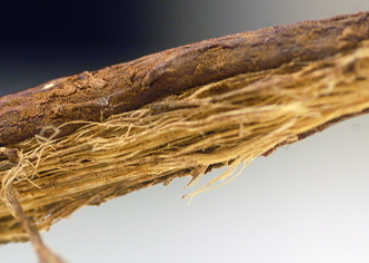 close-up licorice root