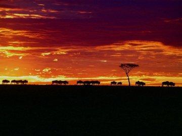Wildebeests in a Kenyan sunset