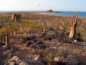 Socotra landscape