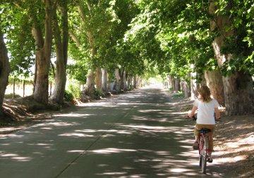 Bike wine tour in Maipú