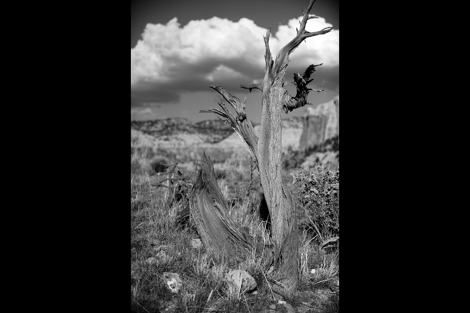 Ghost Ranch still life
