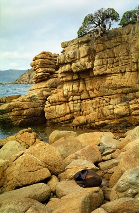 Fur seal on Stewart Island