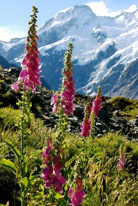 Mt Cook Area, New Zealand