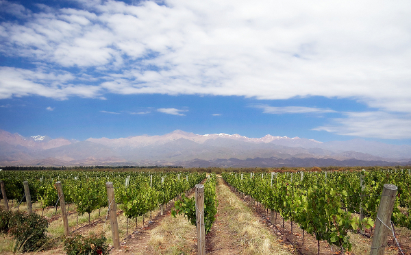 Mendoza vines and mountains