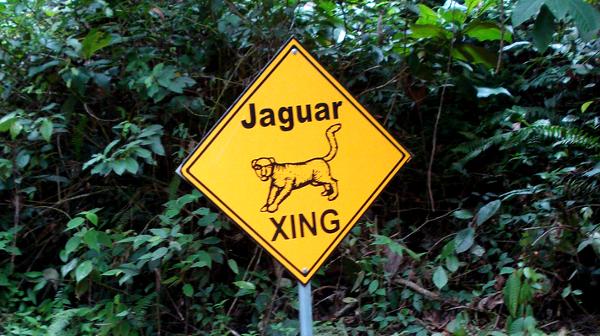 Jaguar xing