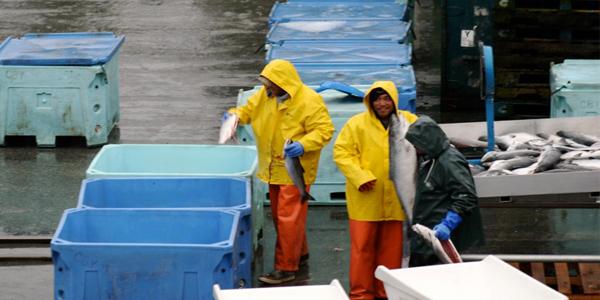 Работа на рыболовном судне на Аляске