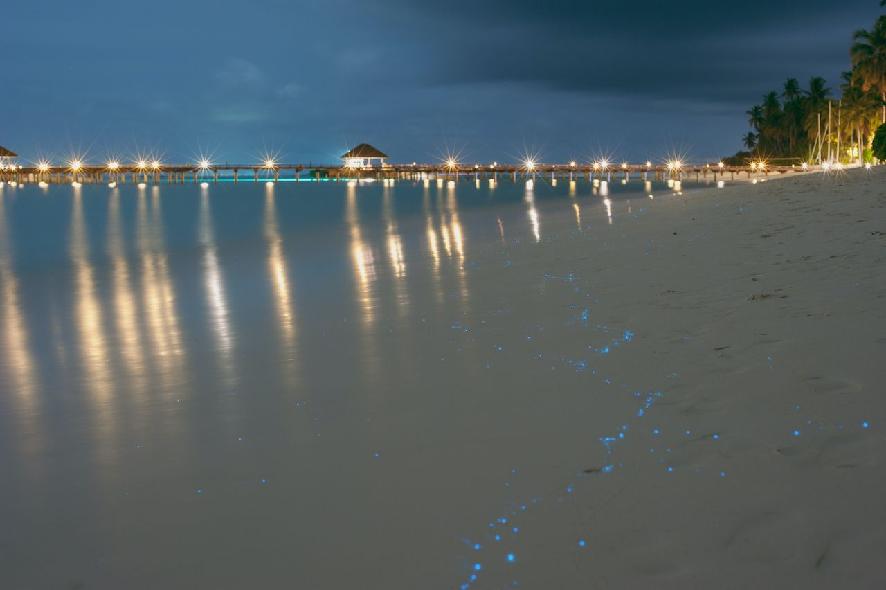 places to see bioluminescence