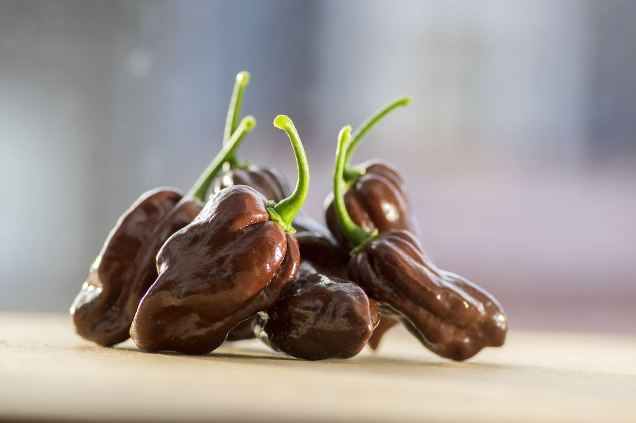 Chocolate habanero peppers hot peppers list