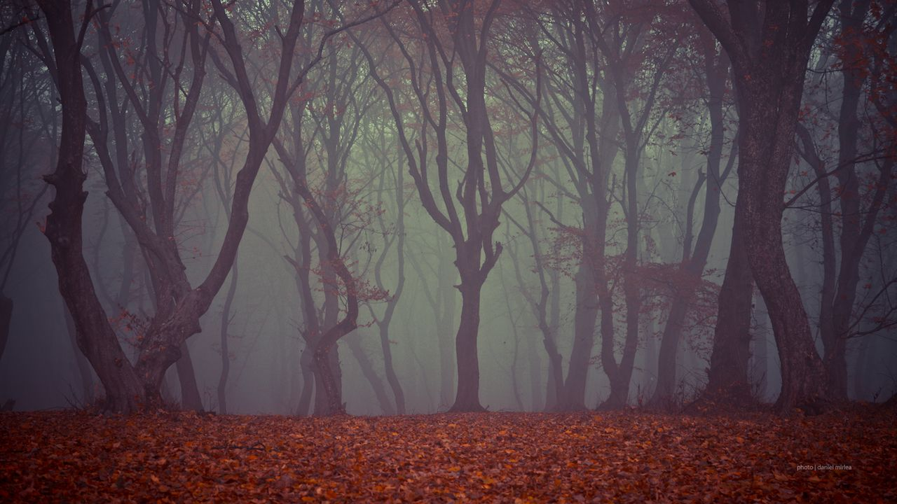 Creepy hoia forest